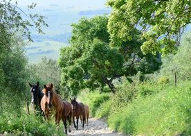 Yoga & rideferie retreat i Toscana, Italien | 12. - 18. maj 2019
